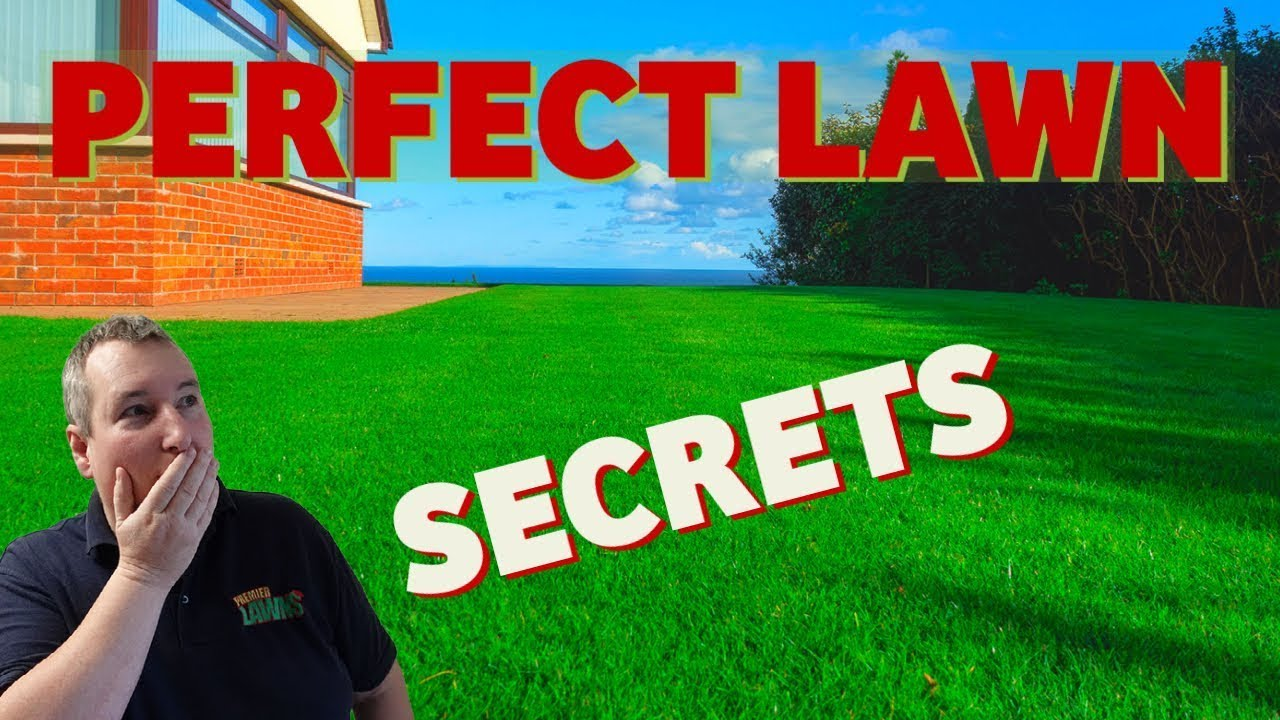 How to have the best looking lawn | Overseeding the perfect lawn