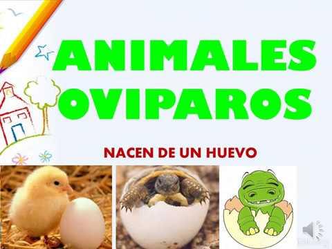 Los Animales Ovíparos Para Niños Como Tu