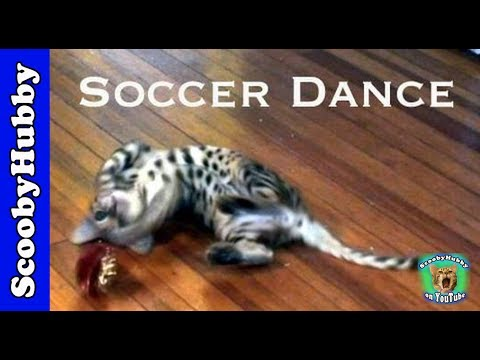 Soccer Dance — Cat Clips #63