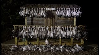 Hired to Hunt Season 4 #11: Hide & Seek!  Goose Hunting and Duck Hunting. Limit Hunts in Alberta.