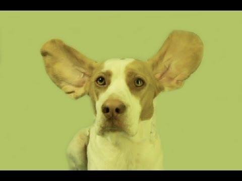 Dubstep Bunny Beagle