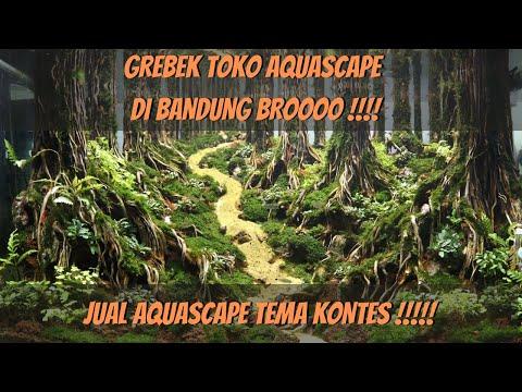 grebek-toko-aquascape-dibandung-!!!-jual-aquascape-tema-kontes-broooo-gokillll-!!!!!