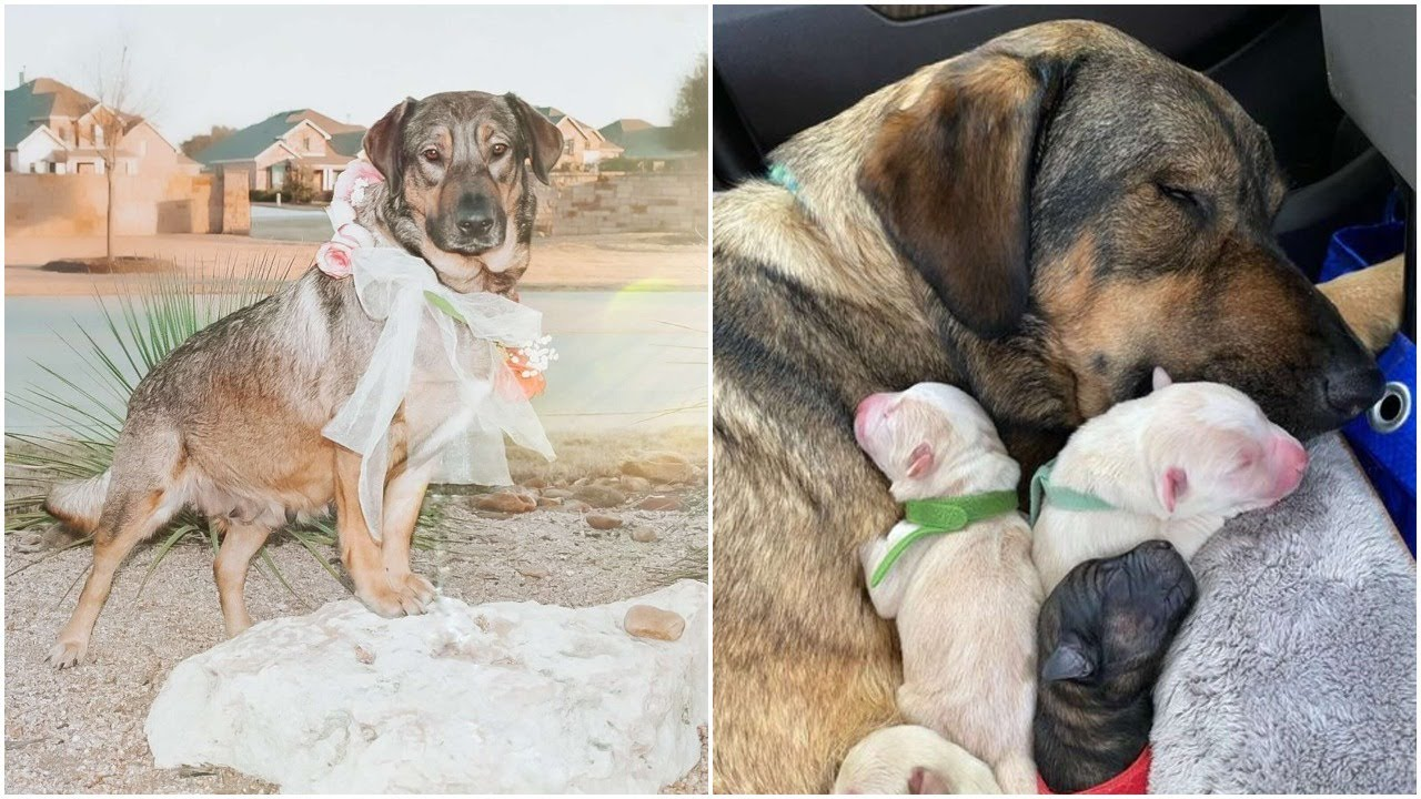 Magi and Her puppies survived from Texas storm