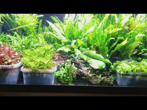 Best Algae Eaters In Planted Tanks!