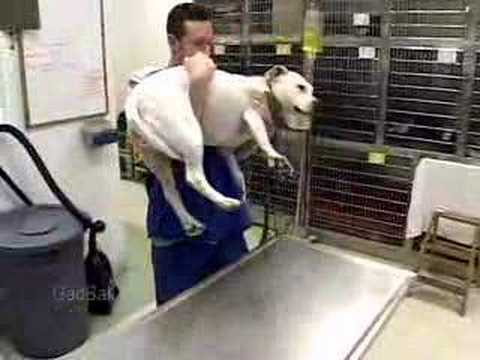 Veterinary Technologists And Technicians Job Description - Youtube