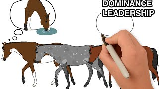 Dominance and leadership in horses | Animated Series Episode 3