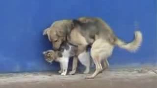 كلب يمارس الجنس مع قطة