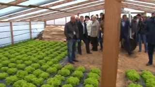 Семинар на тему: «Технология выращивания салата в защищенном грунте»