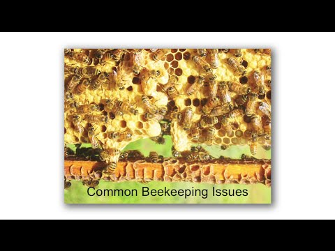 Michael Bush, Common Beekeeping Issues