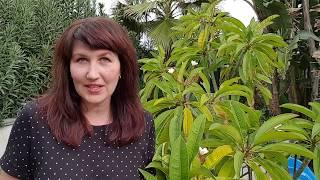 Создание условий для обучения иностранному языку. Елена Шипилова.
