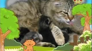 Video BabyTV   Bim and Bam   cats english download MP3, 3GP, MP4, WEBM, AVI, FLV Juli 2018