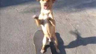 Teach Your Dog To Skateboard
