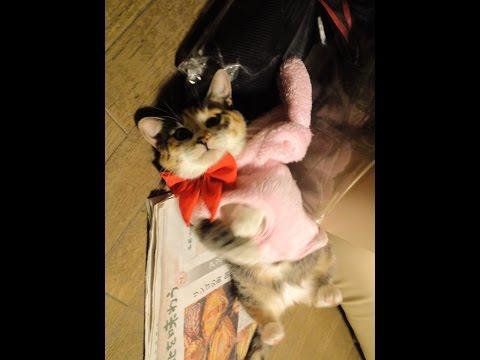 かわいいコスプレを着ていじけてる子猫 -  Cosplay Funny Kitten