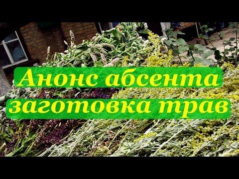 Крапива (растение) — отвар крапивы для волос, полезные