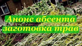 Анонс абсента, заготовка трав(Рецепты домашнего алкоголя проверенные на собственном организме Подписывайтесь http://www.youtube.com/user/alkofan1984?sub_con..., 2014-07-21T19:16:44.000Z)