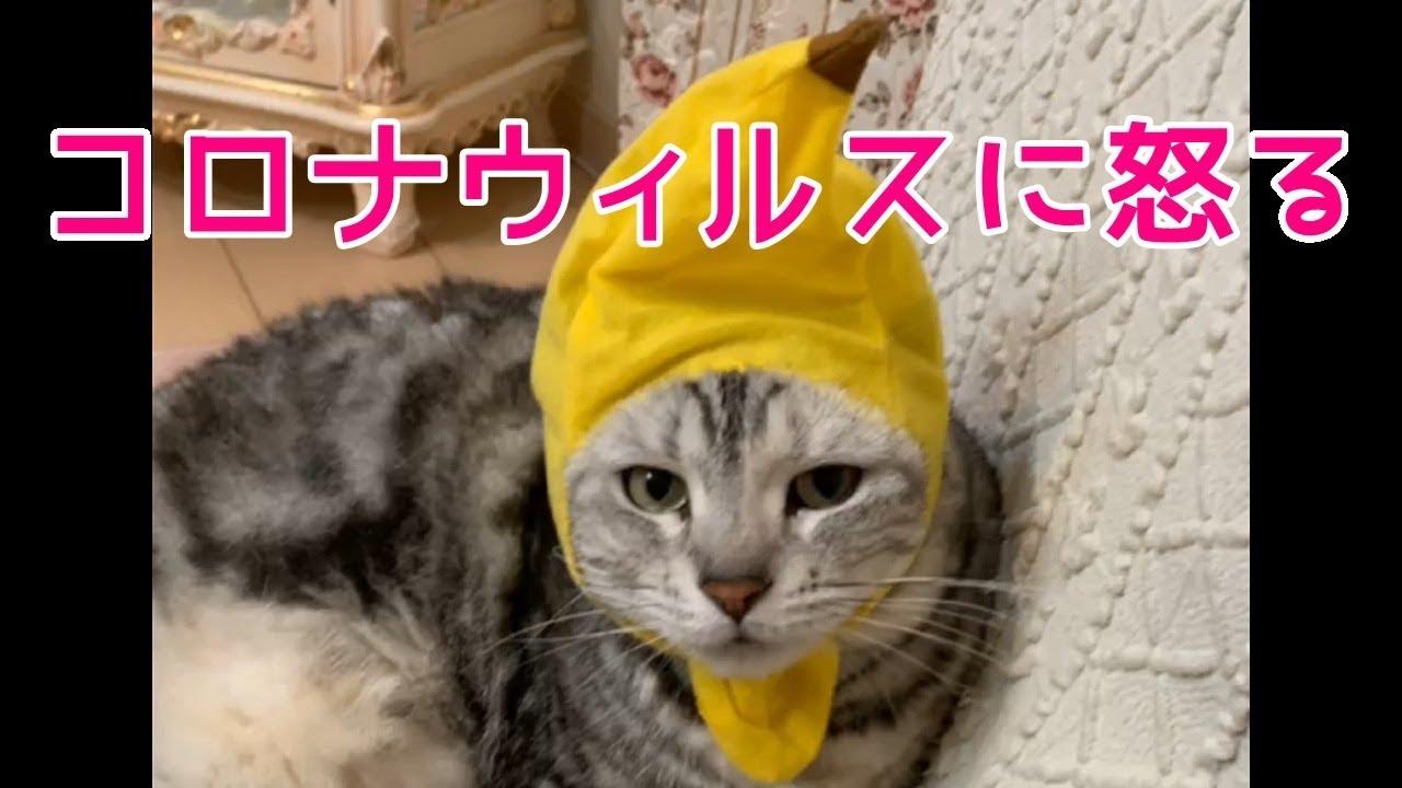 が 動画 猫 しゃべる