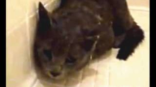Anonymous Rescues Cat & Punishes Abuser