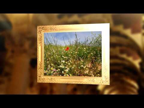 AMAPOLA por Andrea Bocelli