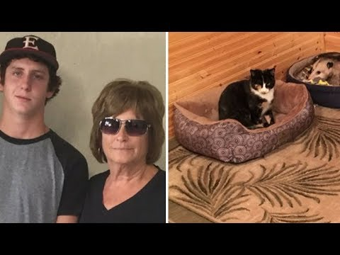 This Woman Thought She'd Rescued A Cat, But Her Grandson Cracked Up When He Saw Its Real Identity