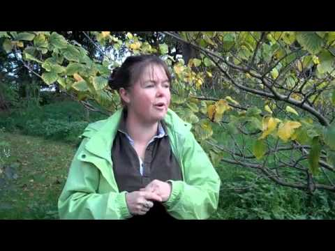 Kew gardens  - medicinal plants part 1