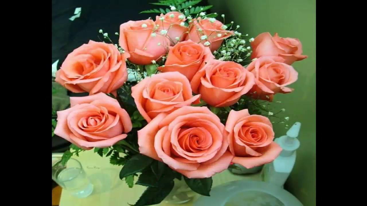 Las Rosas Mas Hermosas Del Mundo Y Sus Colores Youtube