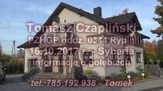Czapliński Tomasz - PZHGP   oddz. 0344 Rypin - gołębie  Rik Custers