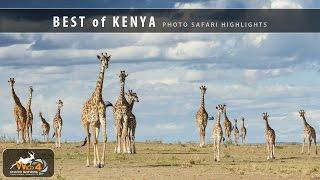Best of Kenya Photo Safari with Stu Porter & WILD4 African Photographic Safaris