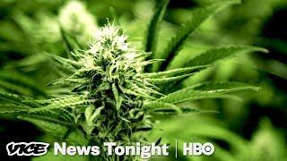 Oregon Weed Market & France Goes Green: VICE News Tonight Full Episode (HBO)