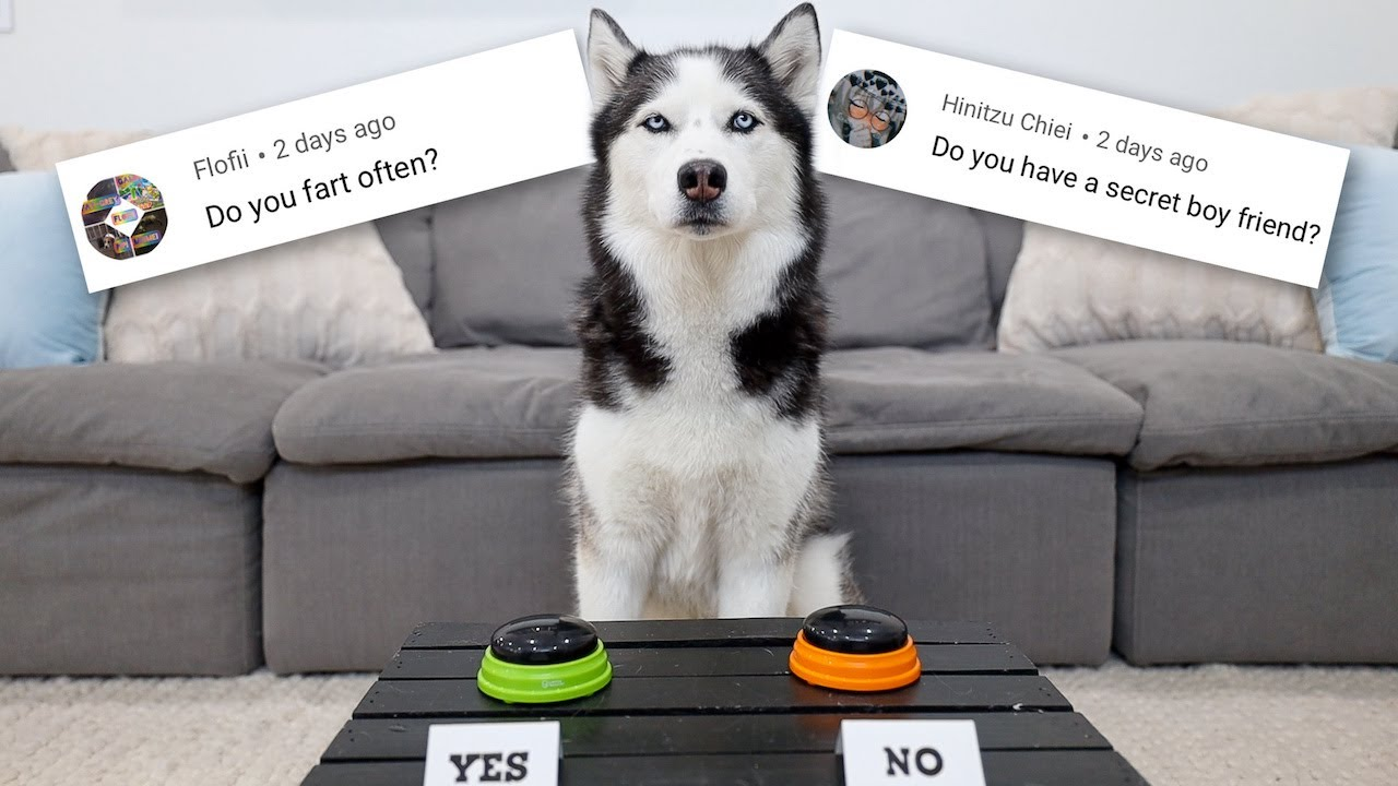 My Husky Answers Fans Most Asked Questions!