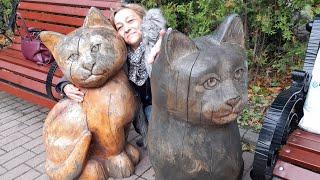 Зеленоградск-город кошек. Котошеф. Коты кошки и котята