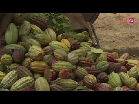Madagascar's world-class cocoa, a bitter sweet cash crop