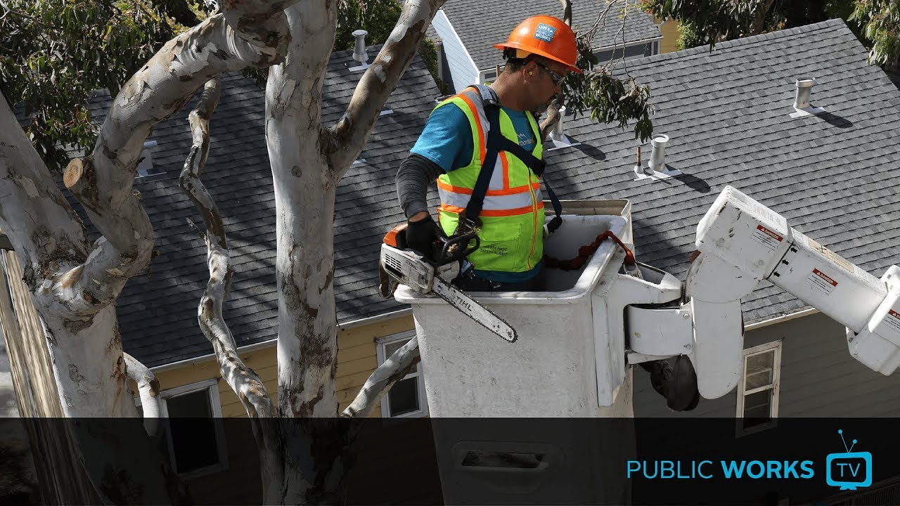 How we maintain 125,000+ street trees - EP. 0039