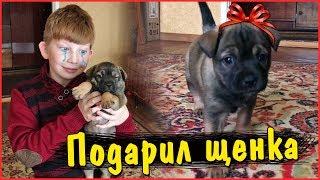 Подарил собаку Богдану. Он заплакал😭