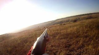 Охота на куропатку видео 2016 новинки