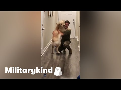 Giddy Golden Retriever leaps into dad's arms | Militarykind