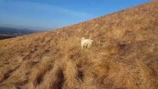 Brian Keebler's husky was recently acting peculiar in Dry Creek Pio...