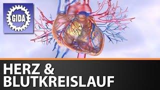 GIDA - Herz & Blutkreislauf - Biologie - Schulfilm - DVD (Trailer)