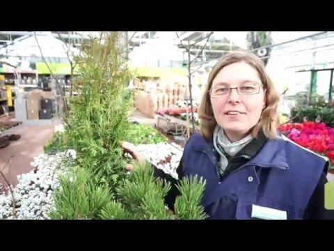 Pflanzen richtig zurückschneiden - Frühjahrsputz im Garten