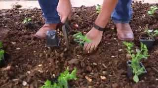 Hundreds Work To Beautify Campus For Arbor Day