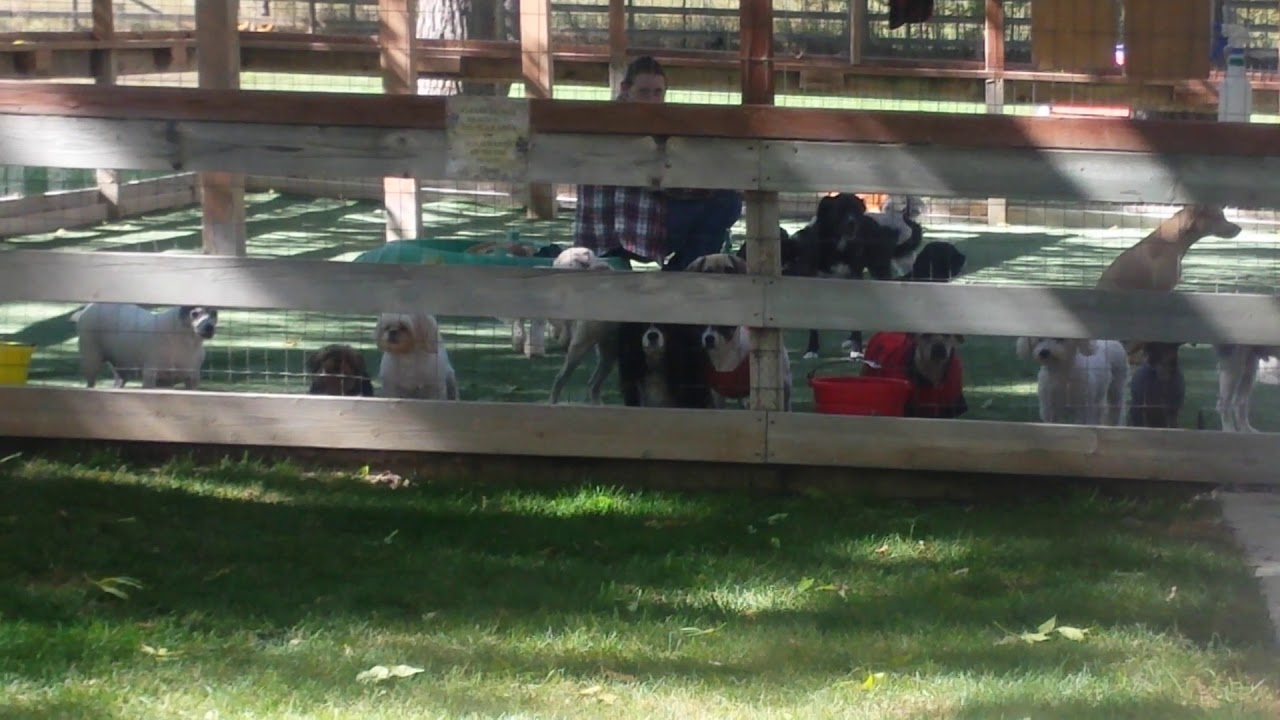 Visiting the dogs at Cottonwood kennels in Boulder