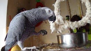 ✫Чем кормить попугая жако!?✫ ЧТО КУШАЕТ РОМА - 3 сезон,1 серия