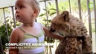 Cette famille vit avec des guépards ! - ZAPPING SAUVAGE