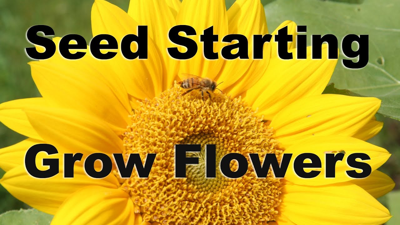 Seed Starting   Grow Flowers From Seed Easily   GardenFork   YouTube