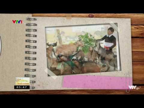 Ngân Hàng Chính Sách Xã Hội - Thủ Tục Vay Vốn Hộ Gia đình Sản Xuất Kinh Doanh Vùng Khó Khăn VTV1