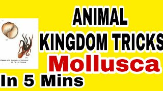 NEET/AIIMS 2019 ANIMAL KINGDOM TRICKS Lecture 9 Mollusca Full NCERT based #Mollusca