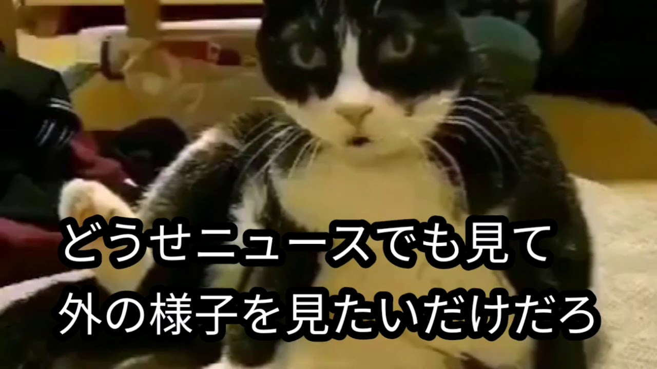 猫 しゃべる 動画