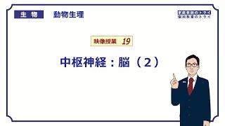 【高校生物】 動物生理19 中枢神経:脳(2)(15分)