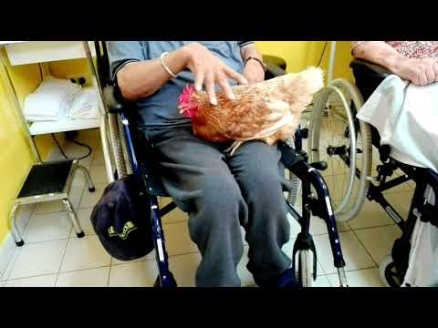Terapia Asistida con Animales en Residencia Geriátrica Municipal Zoilo Feliú