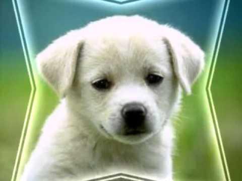 Милые фото собачек и котят!♡♡♡ - YouTube