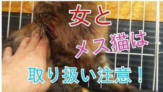 超狂暴な野良猫を慣らす訓練16日目! 女とメス猫は取り扱い注意!😝
